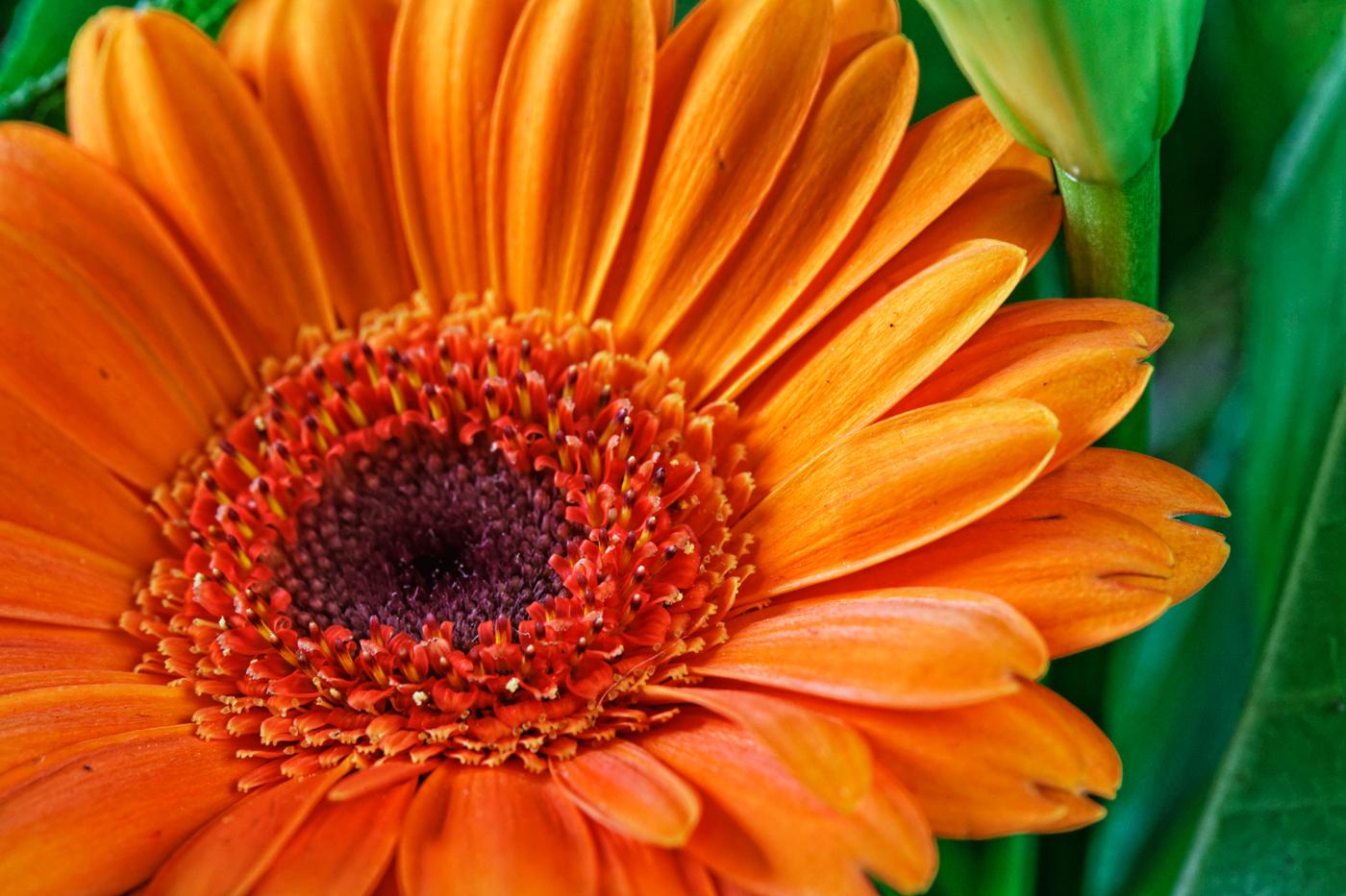 Des fleurs dans un bouquet - Photographies