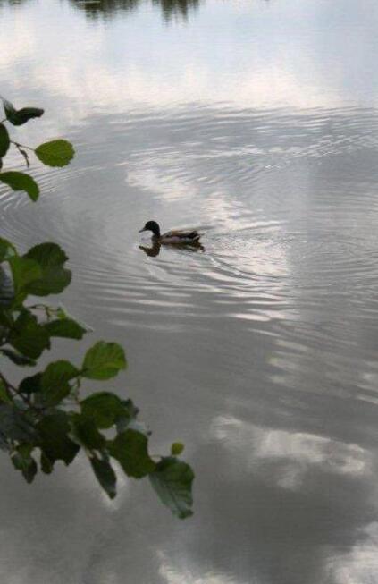 Au lac de St Denis du Maine (18)