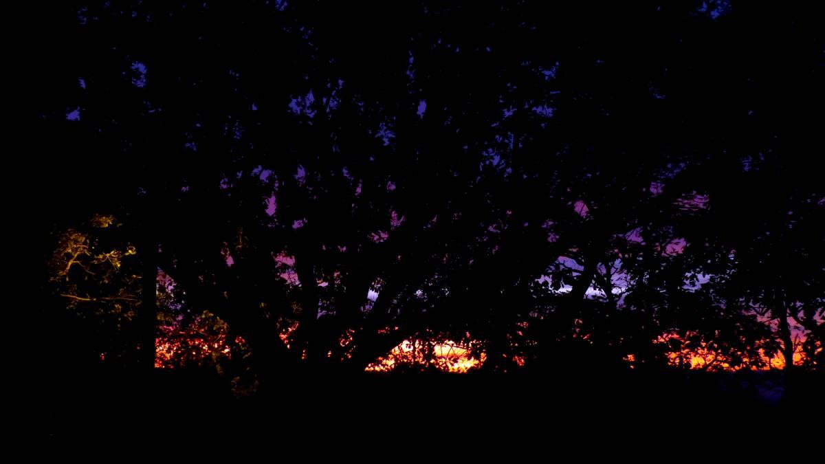 Au jardin de Marithé semaine 45/2013