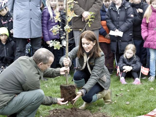 Planter un arbre pour la planète