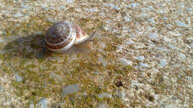 Terrarium d'Escargots