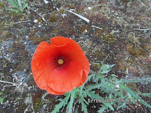 fleurs-et-champignon-005.JPG