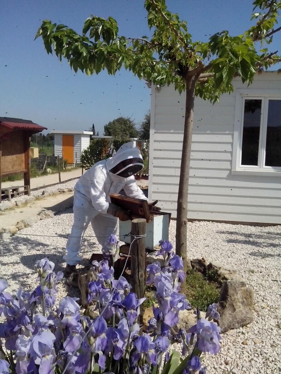 27 avril 2018 : Les abeilles débarquent