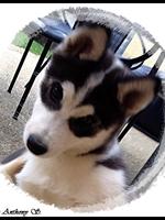 Laïdja (3,5 mois)