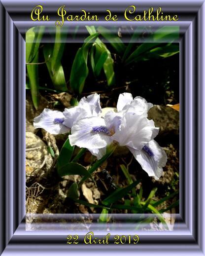 Au Jardin en Avril