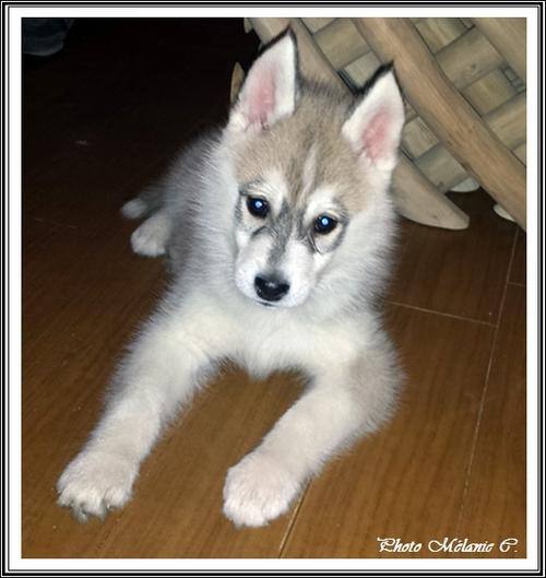 Keyko (2 mois)