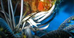 Babou Cote Ocean - Hienhene - Nouvelle Caledonie