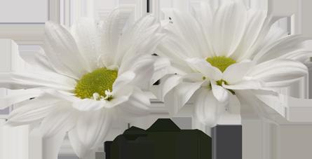 Fleurs fond transparent , Chez Rose Bleue