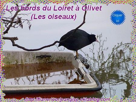 Promenade sur les bords du Loiret à Olivet...les oiseaux