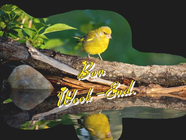 **Petits Oiseaux **Papiers IM