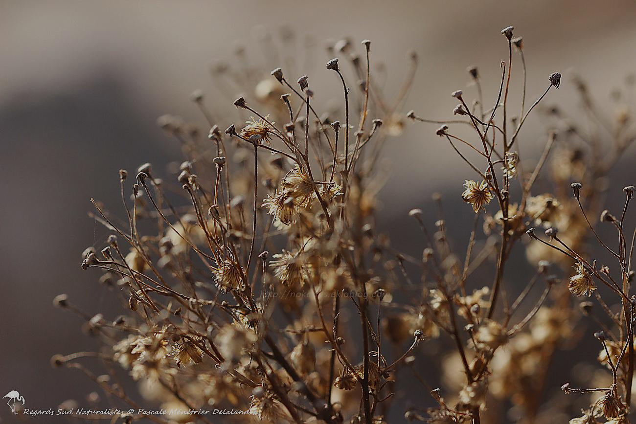 Fleurs de garrigue en hiver