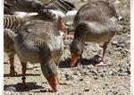 Oiseaux Variés (Photos Laurent)
