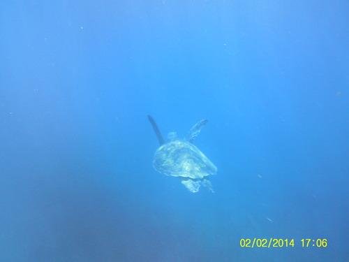 Malendure et ses tortues
