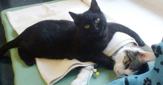 """Résultat de recherche d'images pour """"chat infirmier dans un refuge"""""""