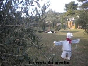 Toussaint 2011+olives 085