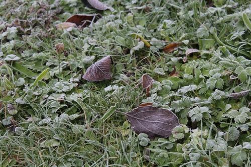 Le jardin en décembre