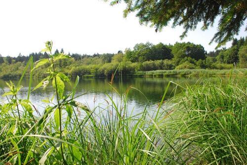 Le lac Bonlieu