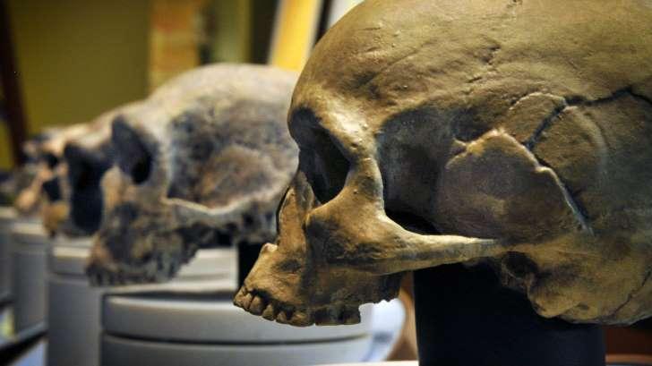 Néandertal n'est pas la seule espèce éteinte qui a croisé la route de l'homme moderne