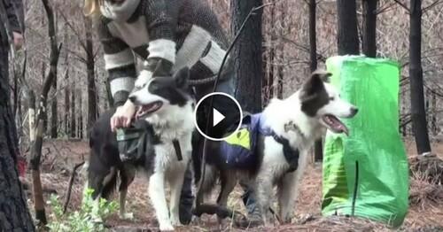 Et si les chiens sauvaient les forêts brûlées ?
