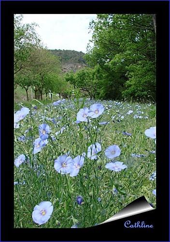 lin-bleu-2.jpg