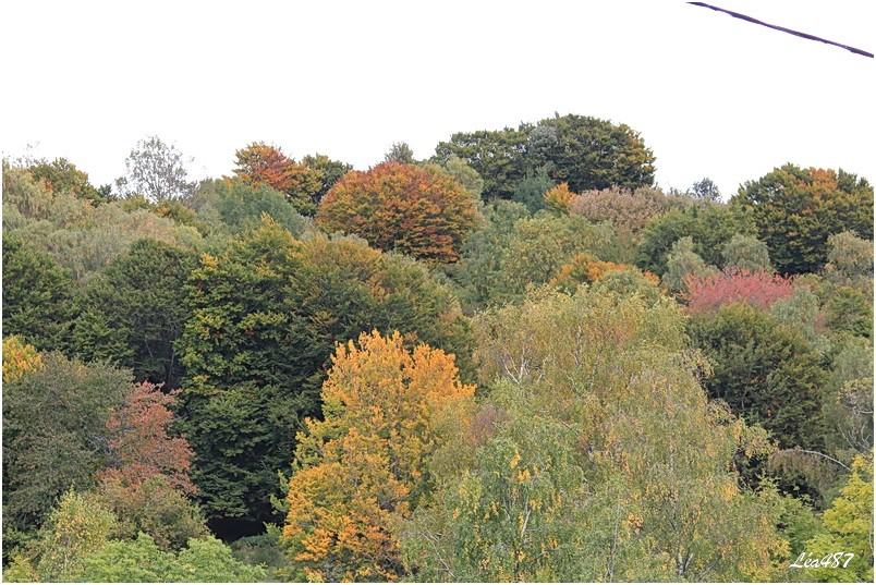 Saison-3287-arbres-automne.jpg