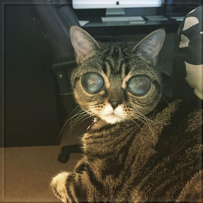 Chat alien