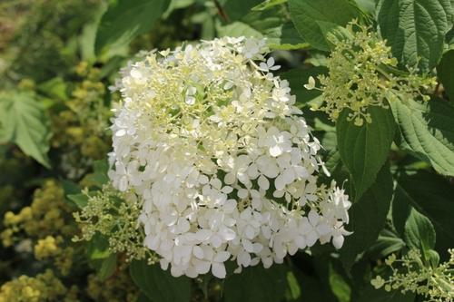 floraisons estivales