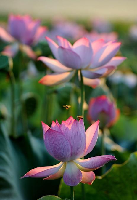 * Fleurs
