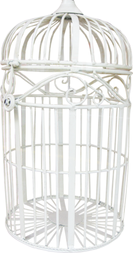 Cage oiseaux