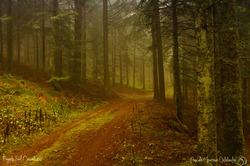 Forêt Bourbonnaise