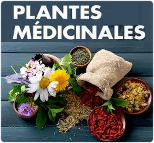 Plantes médicinales à avoir dans son armoires à herbes.