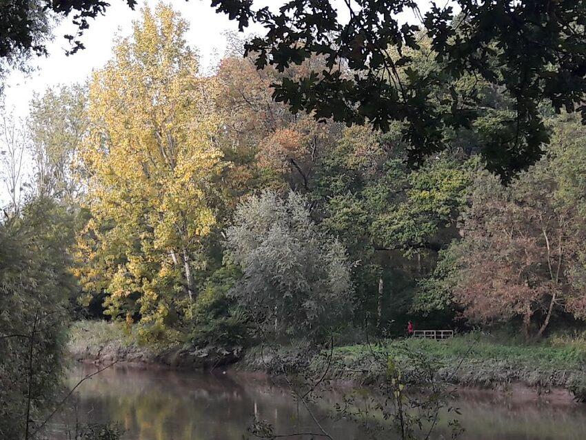 Couleurs d'automne à Rezé