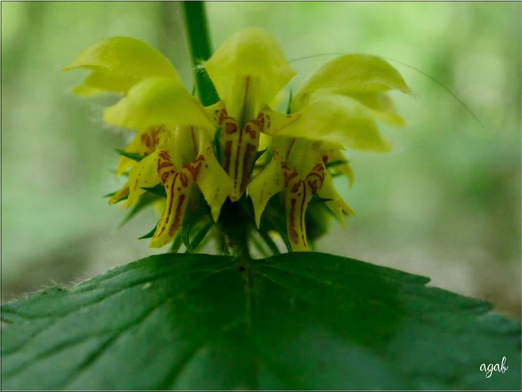 du jaune pour plaire aux abeilles