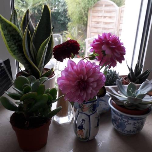 Mes petits bouquets