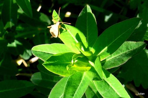Des insectes sur les plantes