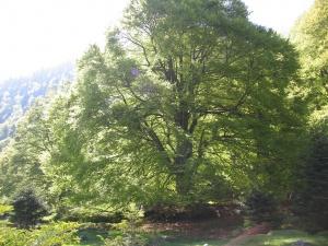 Symbolique des arbres
