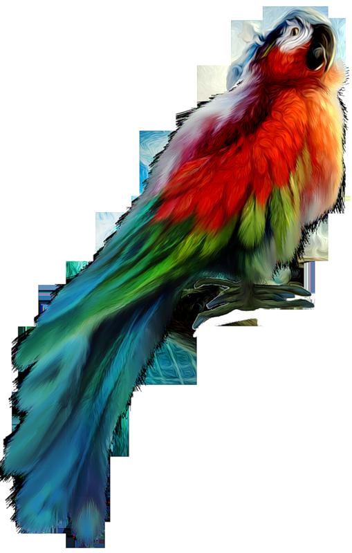 Oiseaux  ( exotiques ) 1