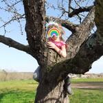 Louisa M. a grimpé dans un arbre !