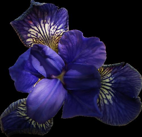 Fleurs Têtes Série 10