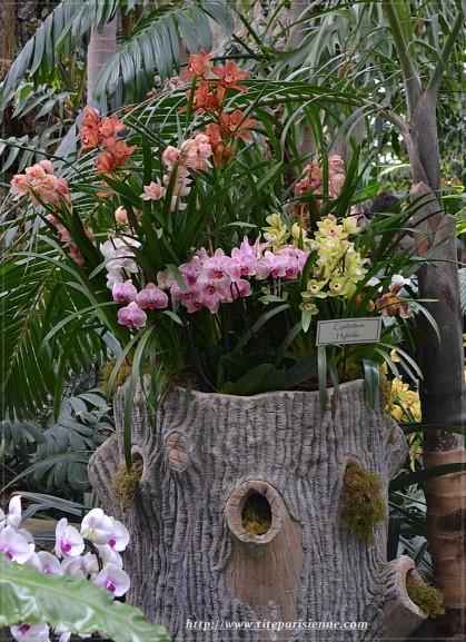 Orchidées Jardin des Plantes 2