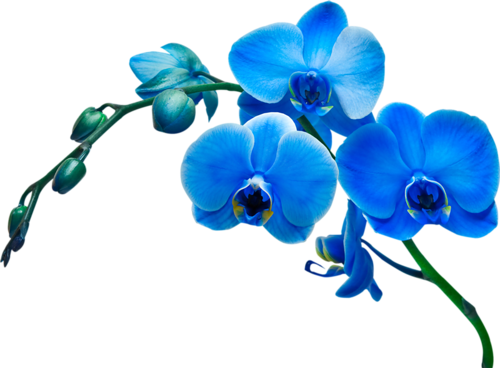 Fleurs (branches) Série 12