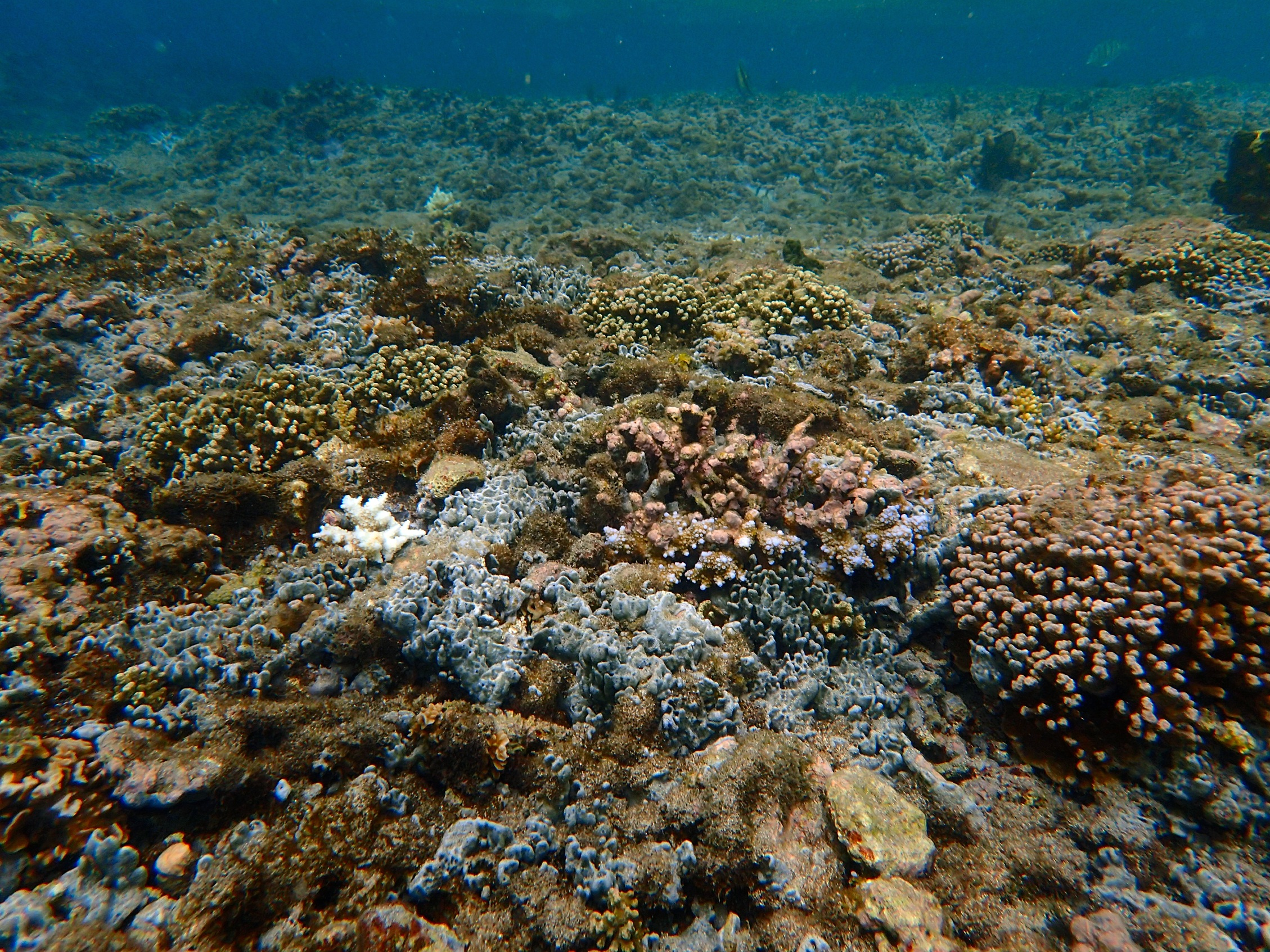 http://ekladata.com/APBQ0E0139mFnJ1YNwty7aPKhd8/reunion-saint-pierre-paysage-corallien.jpg