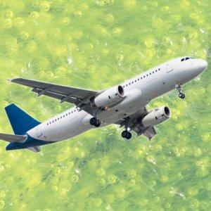 certaines algues seraient particulièrement adaptées à la fabrication de kérosène