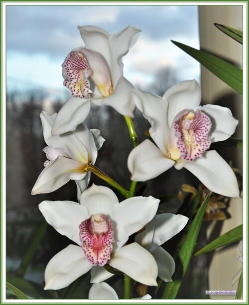 Orchidées Mouzéennes