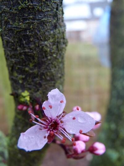 le printemps s'installe