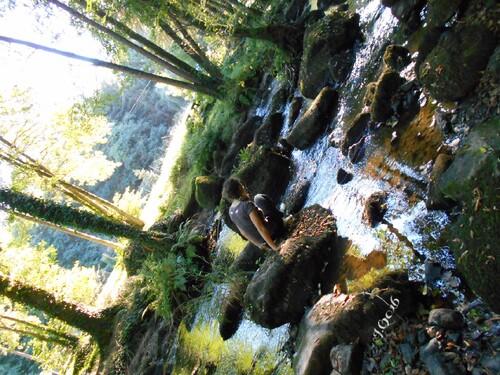 Petite Ballade sur le sentier botanique de Lanrelas