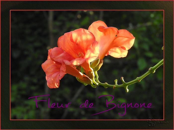 Fleurs de .......
