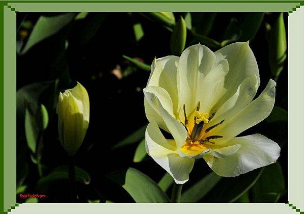 Fleurs papa 03 2011 a