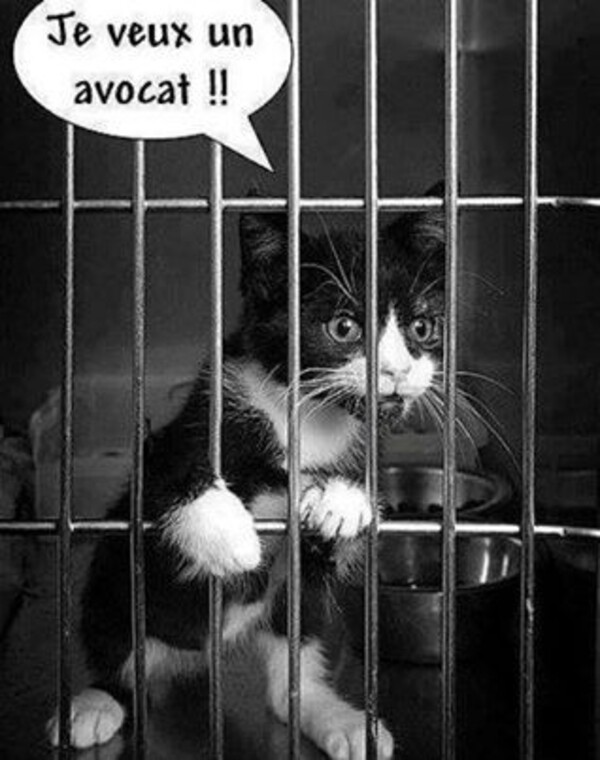 Humour du samedi ... !!!