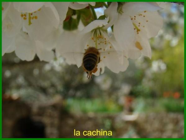 abeille-2013--22-.JPG
